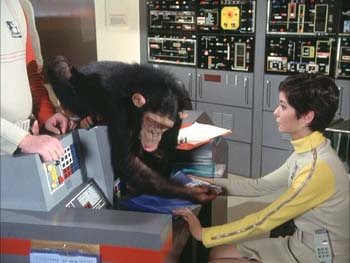 There is nothing like taking a break from work with your friend the chimpanzee.