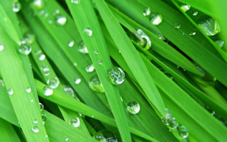 Rain drops are amazing in their fluidity and touch.